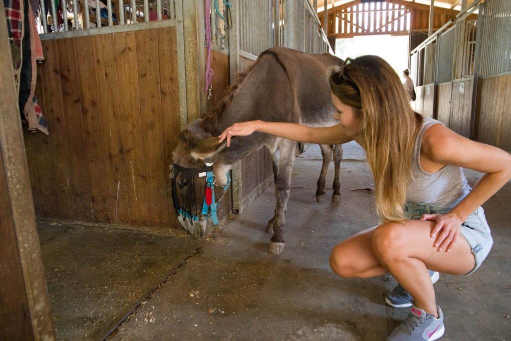 Corfu Donkey Rescue 2