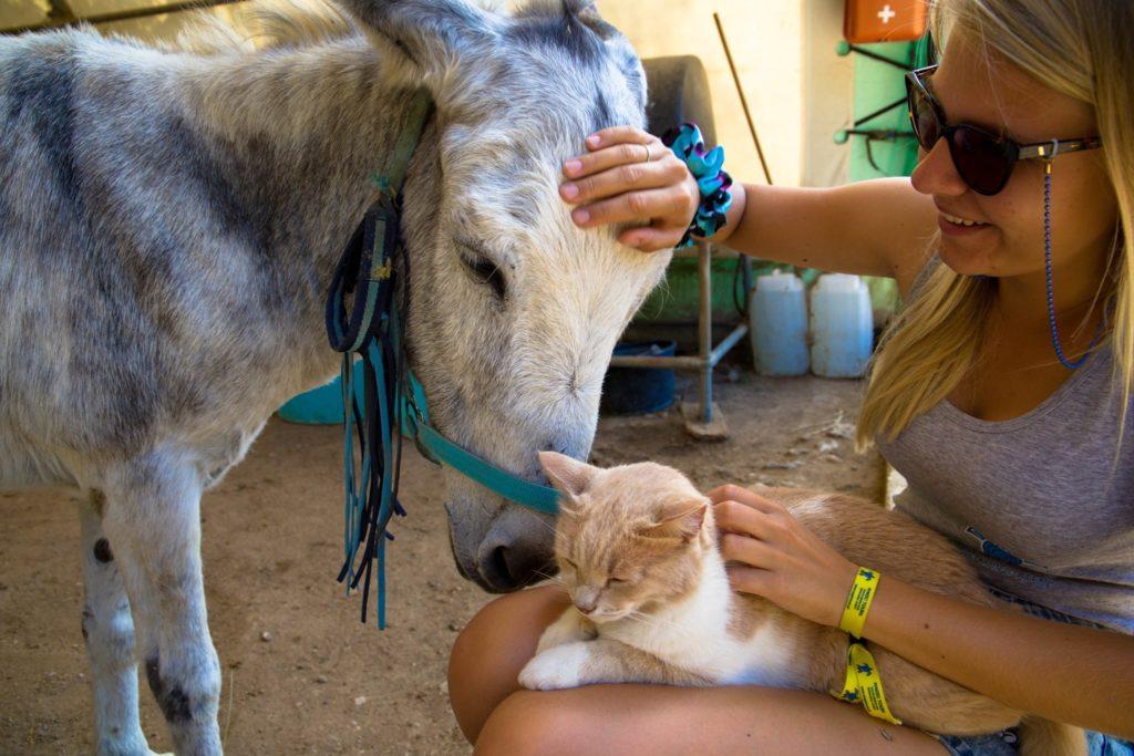 Cordu Donkey Rescue 3